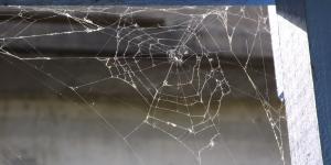 Spiderweb in corner of house